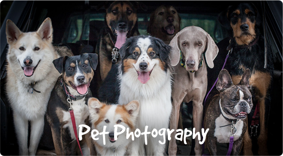 Services_pet_photography
