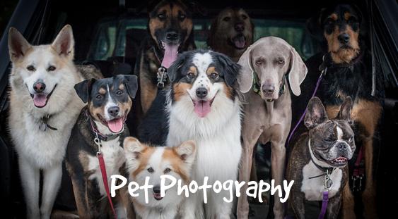 Services_pet_photography
